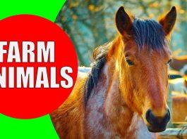 farm animals for children
