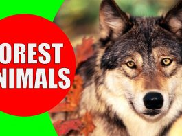 forest animals for kids