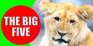 africa's big 5