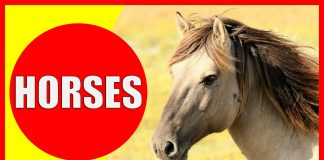 Video about horse facts