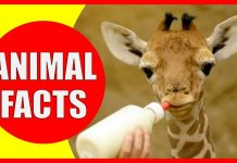 interesting facts about animals