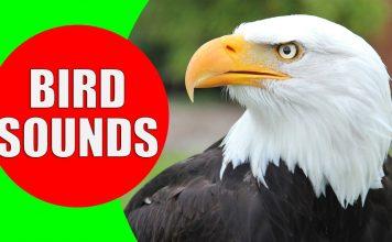 birds of prey for kids video