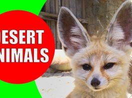 desert animals for children