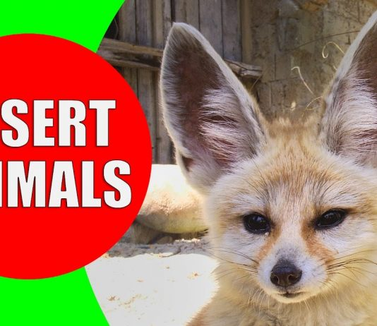 desert animals for children