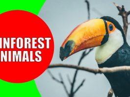 rainforest animals for children