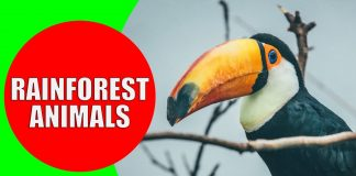 rainforest animals for children