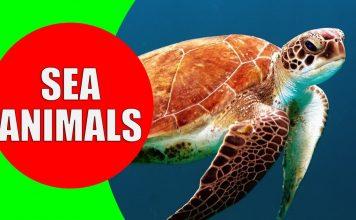 sea animals for children