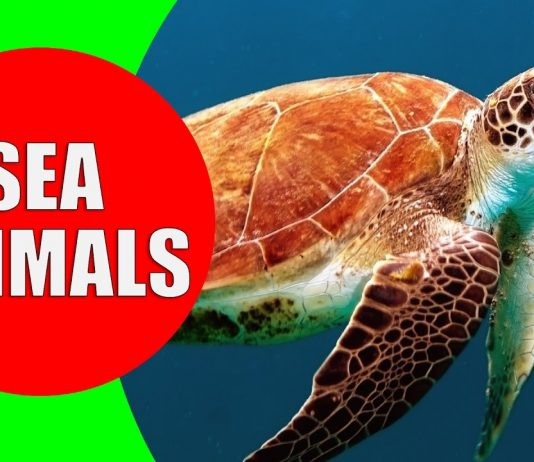 sea animals for children